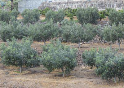 Finca Las Longueras cultivos 7